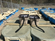 Mesocosm array smaller