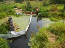 salish experimental pond