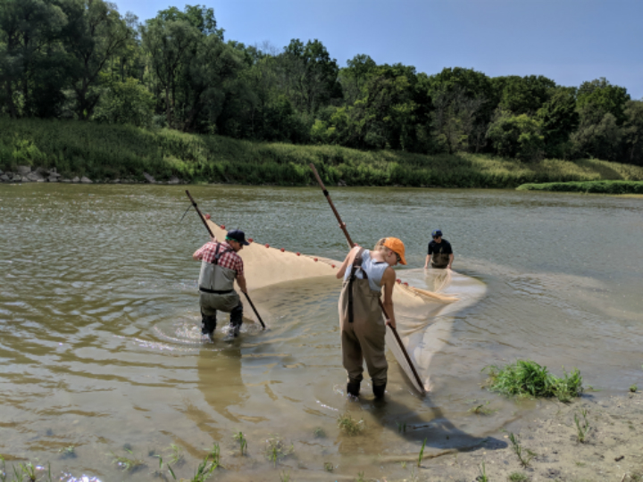 Sampling Eastern sand darter